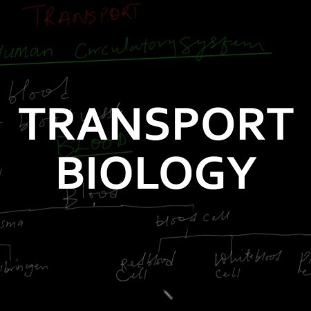 A/L Biology Transport